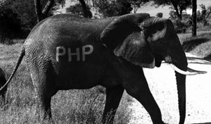 PHP 5.5 update and JSON: A battle for freedom 0