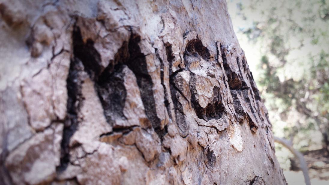 Autocorrect in Nature